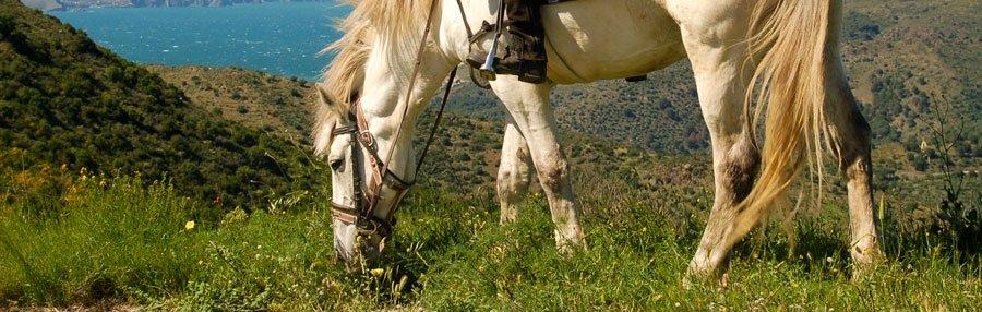 hípiques cavalls